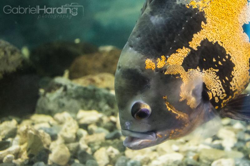 fish, aquarium, water, shiny