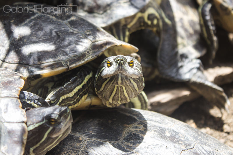turtles, funny, face, smile, grin