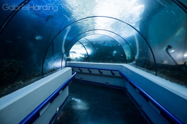 aquarium, glass tunnel, tunnel, fish