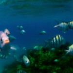 fish, caribbean, gopro, blue, yellow, reef, sosua