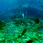 blue, yellow, gopro, fish, caribbean