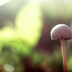 mushrooms, dominican republic, green, shrooms, nature