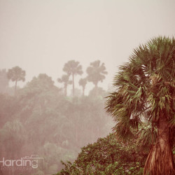 rain, tropics, palm tree, nature,