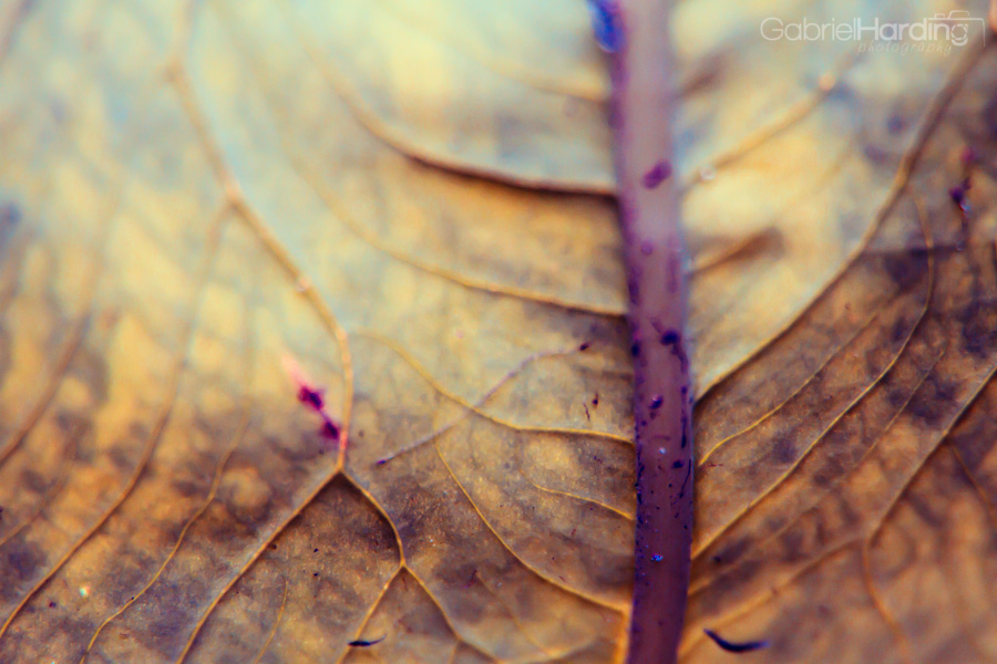 leaf, veins, nature, leaves, macro photography