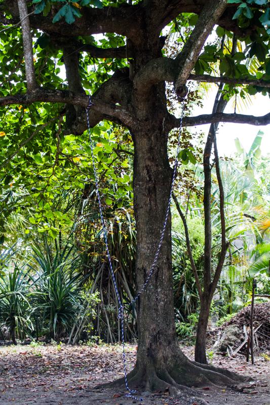 almond tree, tree, nature, big, tall