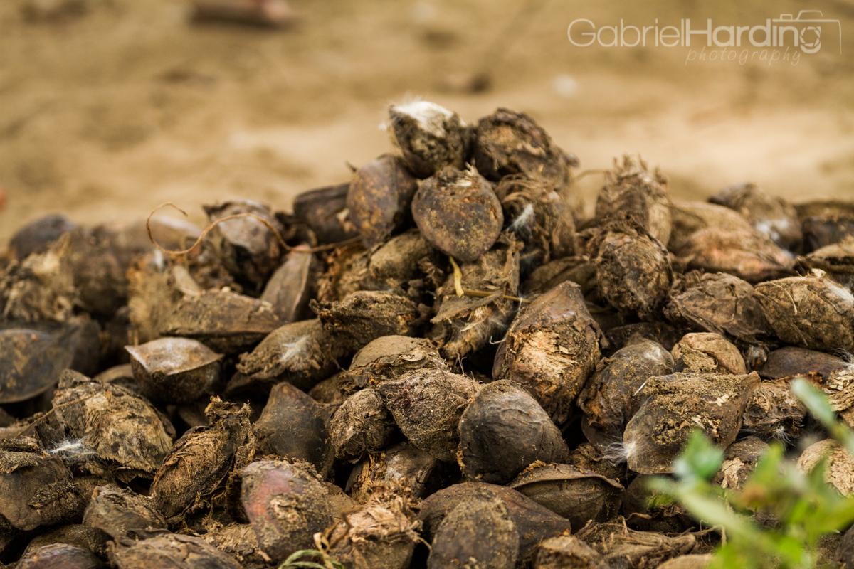 almond, fruit, dry, almonds, pile