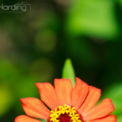 flower, sunrise, orange, flower, nature