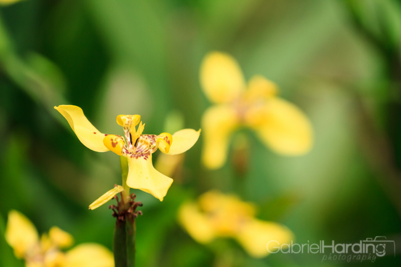 orchids, yellow, spots, flowers, nature