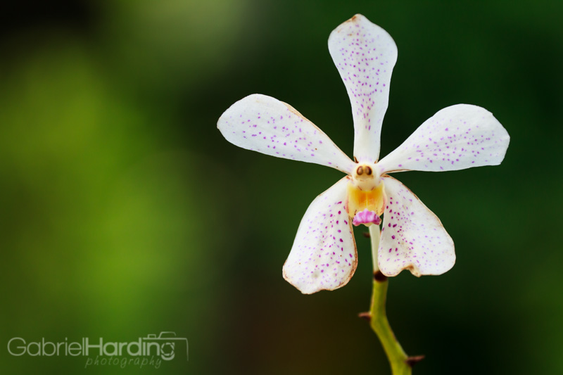 orchid, white, spots, face, smile, scream, funny, flower, nature