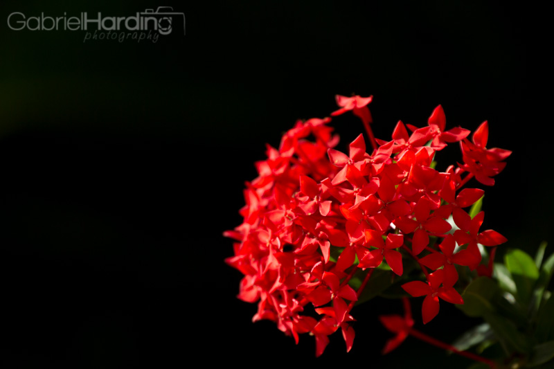 red, flowers, group, bouqet, black