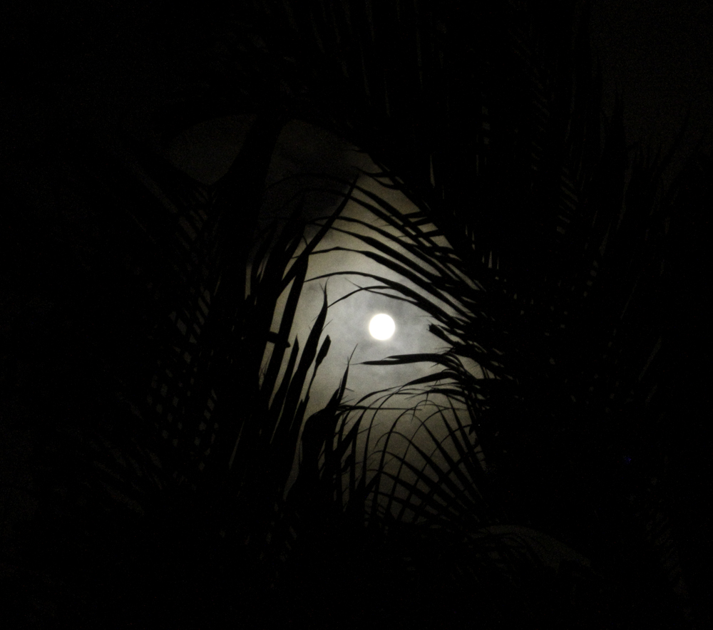 full moon, black, white, tropics, dominican republic, palms, night