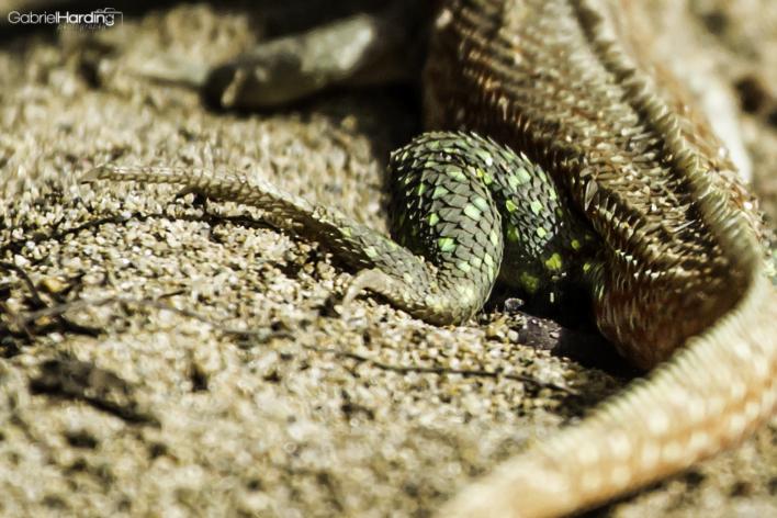 scales, leg, lizard, green, macro, http://wetravelandblog.com
