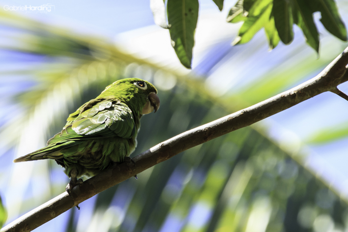 parrot, animal, bird, green, nature, nature photography, http://wetravelandblog.com