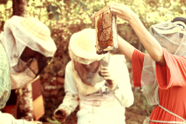 bees, apiculture, beehive, dominican republic, shine, white, summer