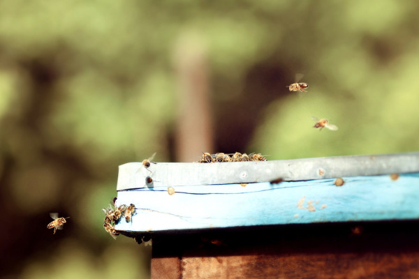 bees, apiculture, beehive, dominican republic, shine, fly, hover
