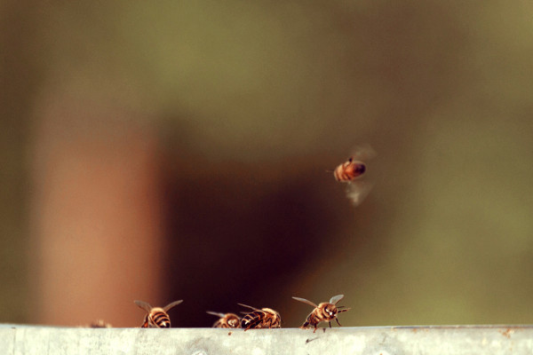 bees, apiculture, beehive, dominican republic, shine,