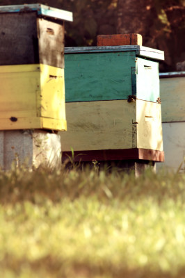 bees, apiculture, beehive, dominican republic,