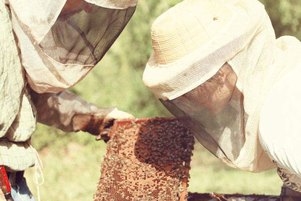 bees, apiculture, beehive, dominican republic, face net,