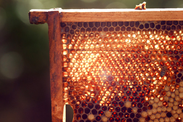 bees, apiculture, beehive, dominican republic, honey comb, light, summer, shine