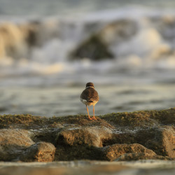 bird, animal, wanderlust, ocean, rocks, reef, http://wetravelandblog.com