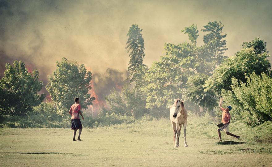 horse, fire, baseball, dominican republic