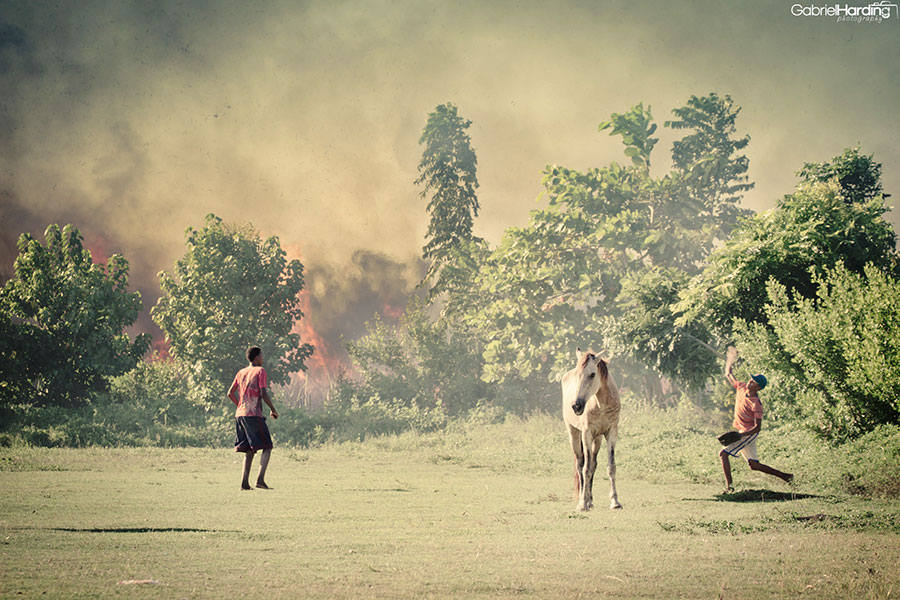 Horse Fire Baseball Dominican Republic