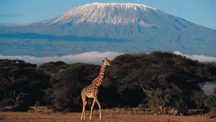 mount kilimanjaro, mountains, giraffe, animals, landscape