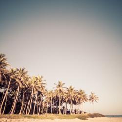 palm trees, palms, coconut trees, caribbean, tropics