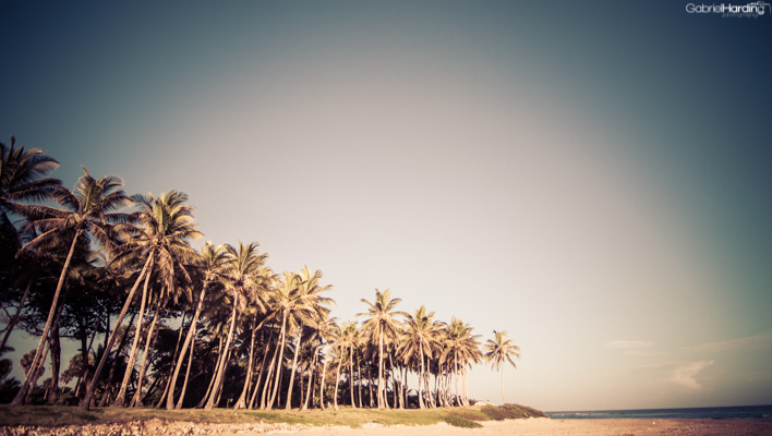 palm trees, palms, coconut trees, caribbean, tropics