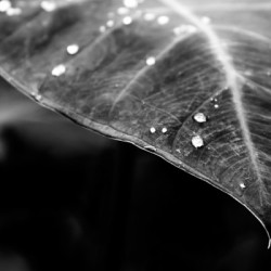 leaf, lines, water drops, black and white, www.wetravelandblog.com