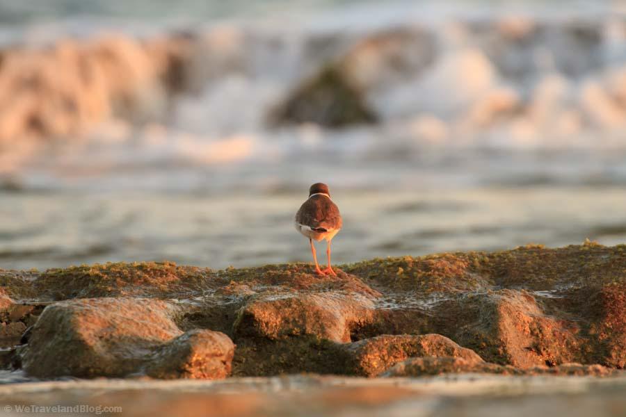 bird, rocks, animals, ocean, morning