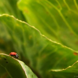 lady bug, red, bug, insect, green