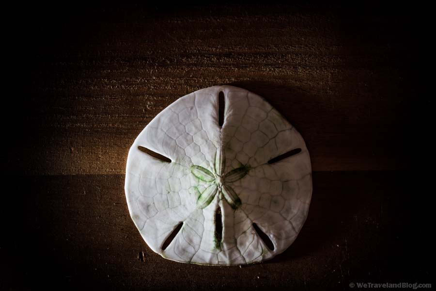 sand dollar, Best Pictures of 2013, animal, skeleton