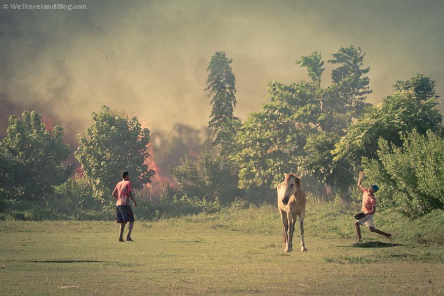 baseball, horse, fire, field, throwing