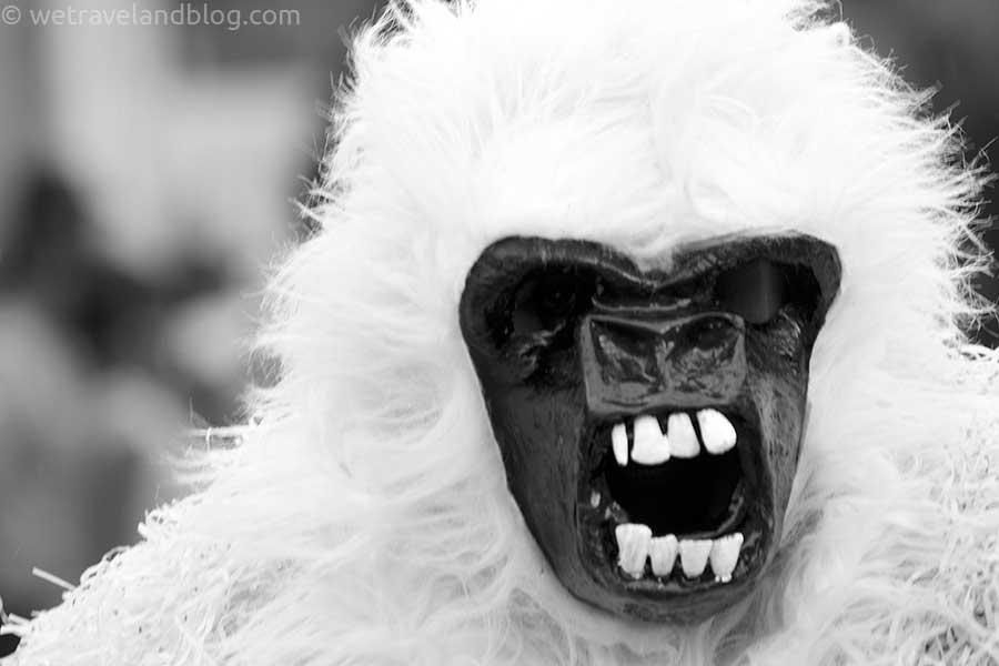 albino gorilla carnival dominican republic