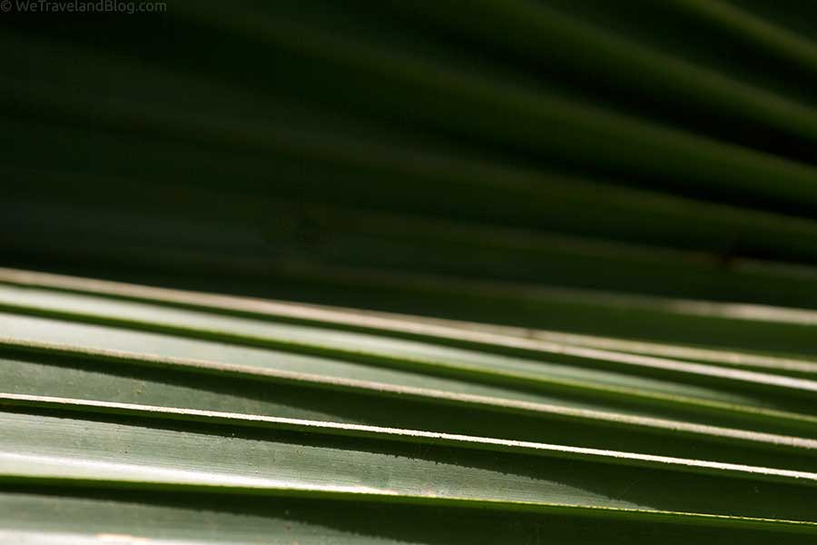 Green-Rolling-Palm-Small