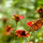 butterfly-wallpaper-small