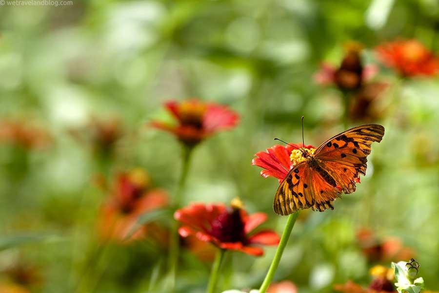 butterfly-wallpaper-small