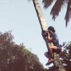 coconut tree, climbing, guy, tree