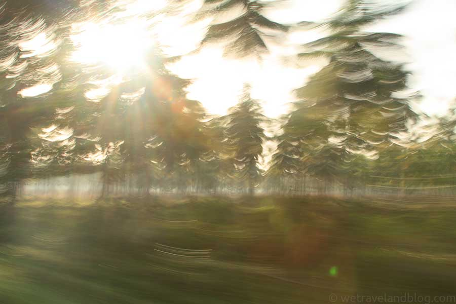Trees-in-motion
