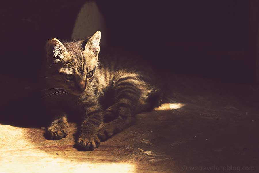 kitty, cute, kitty cat, sun beam, sun ray, vintage,