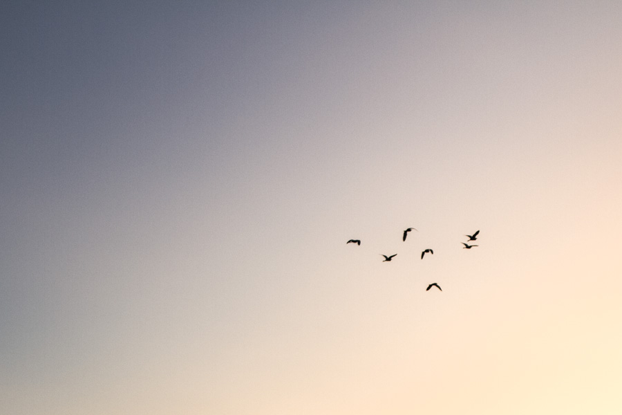 birds, in the sky, overhead, peaceful, fly, http://wetravelandblog.com