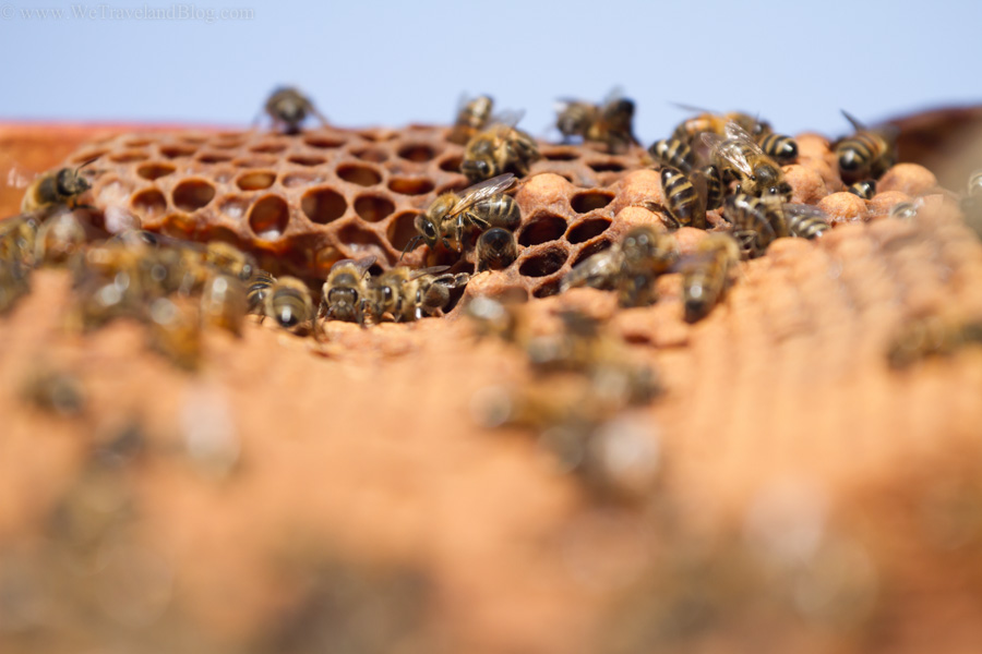 HONEY, APICULTURE, bees, bee hive, dominican republic, http://wetravelandblog.com