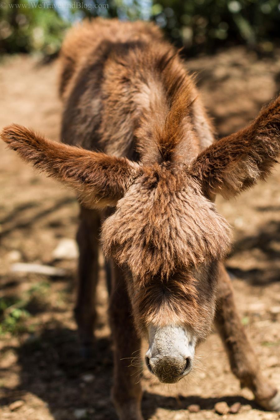 donkey, baby donkey, baby animal, adorable, cute, adorable, http://wetravelandblog.com
