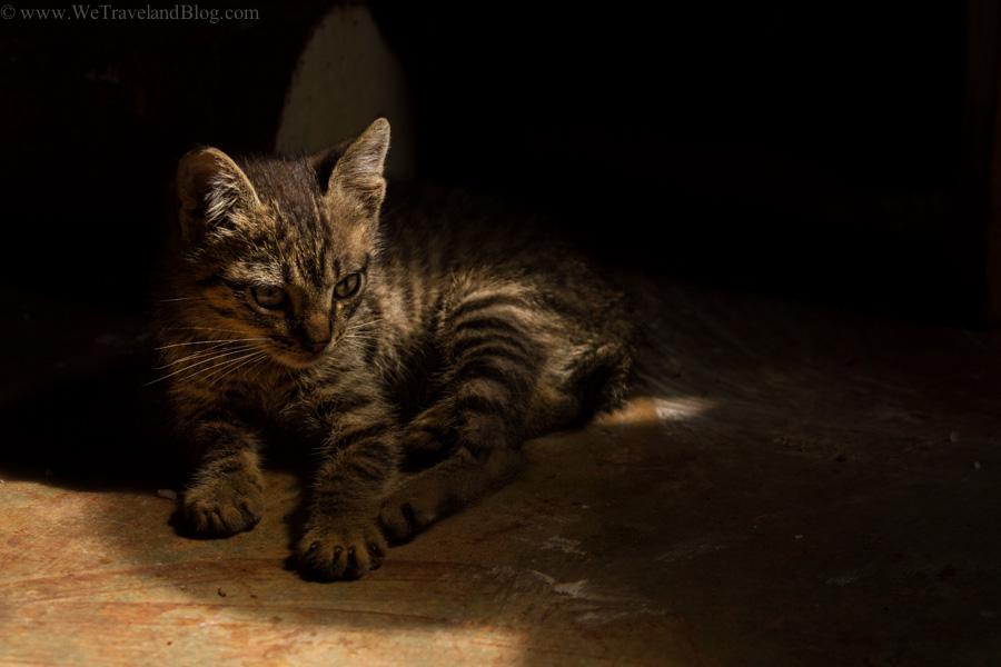 cat, kitten, cute kitty, cat in the shade, local life, dominican republic, pet, http://wetravelandblog.com