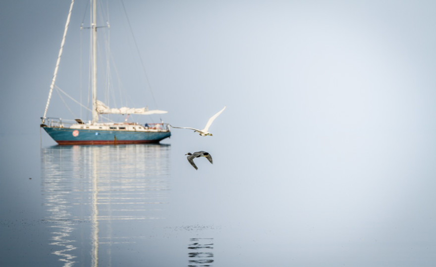 sailboat with birds small-1