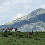 landscapes, horses, animals, nature, hills, dominican republic