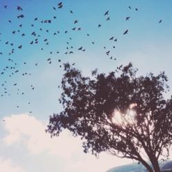 wanderlust, tree, flight, birds, clouds, california, dreaming, love my life, http://wetravelandblog.com
