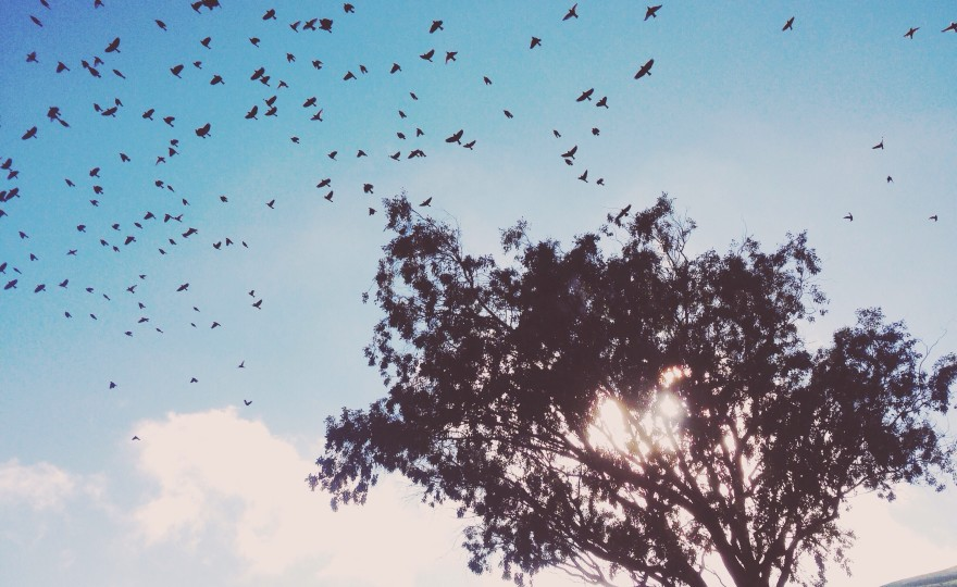 wanderlust, tree, flight, birds, clouds, california, dreaming, love my life, http://wetravelandblog.com