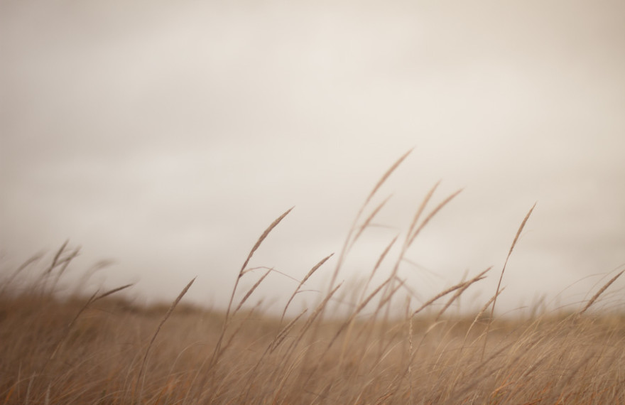 tall grass, grass, brown, nature
